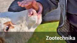 Odnośnik do Zootechnika